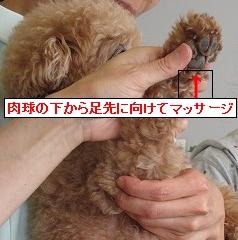 IMG_5232 解説